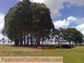 Fazenda de 3.500 hectares tendo 1100 metros de altitude, para plantio de grãos no Brasil